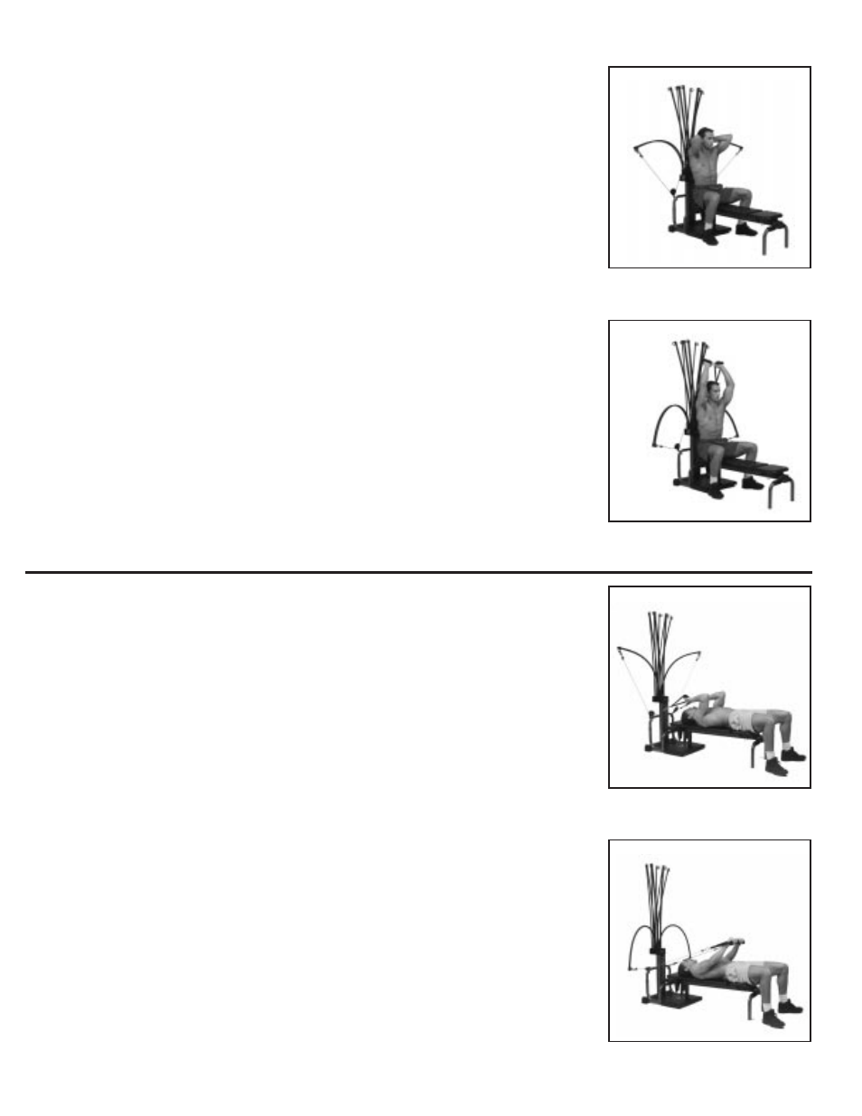 Label Muscles Of The Arms Manual Guide